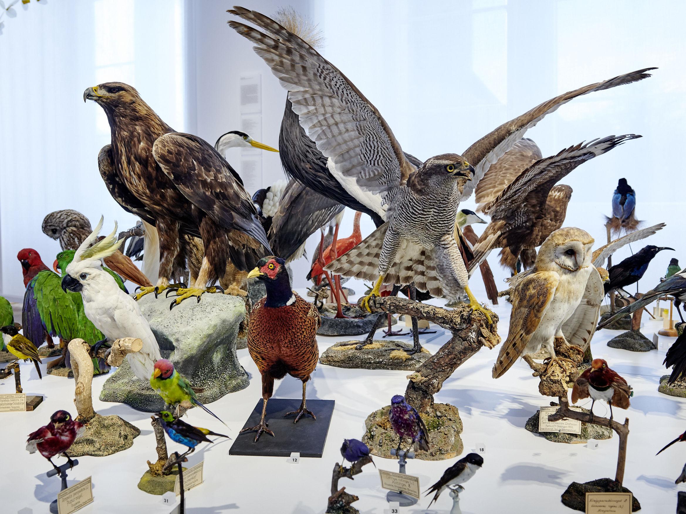 Thematische Führung im Dialog: Über die Vielfalt der Federn und das Verschwinden der Vögel