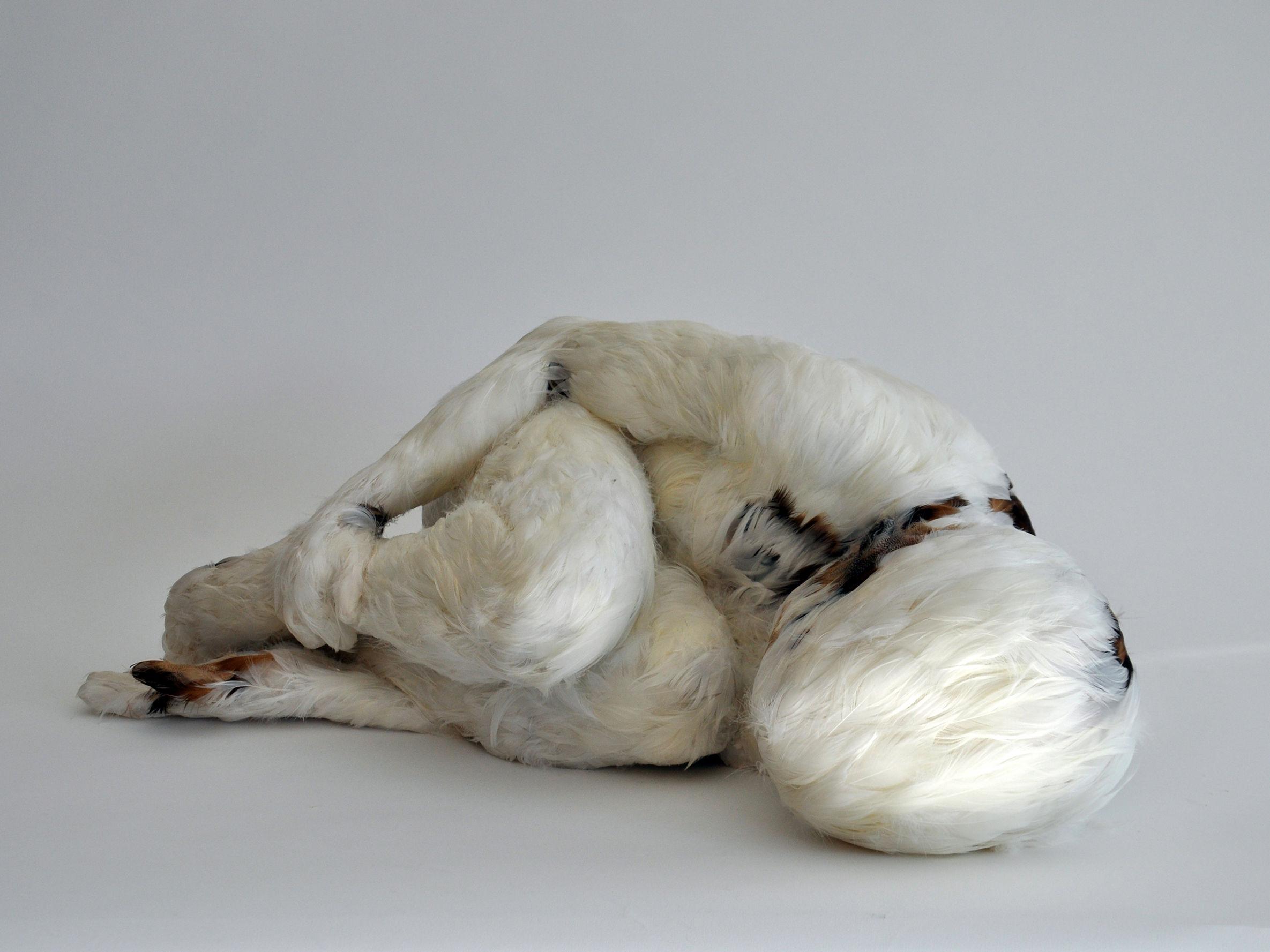 Thematische Führung im Dialog «A Feather's not a Bird. Federn in der visuellen Kultur»