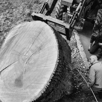 Ernst Gamperl – Dialog mit dem Holz