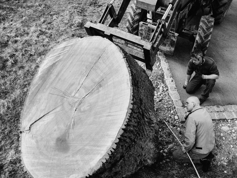 Dialogische Führung: Ernst Gamperl. Das Lebensbaum-Projekt